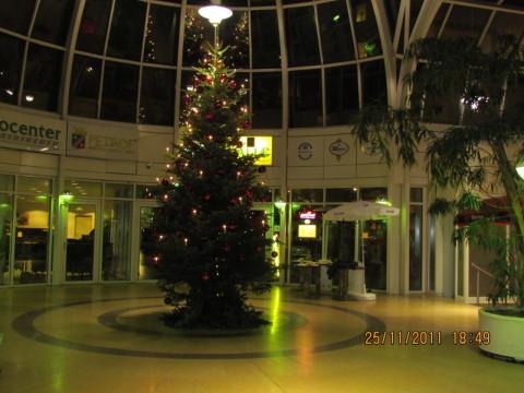 Weihnachtsbaum, Schmuck, Blumenhaus Sauertz Berlin