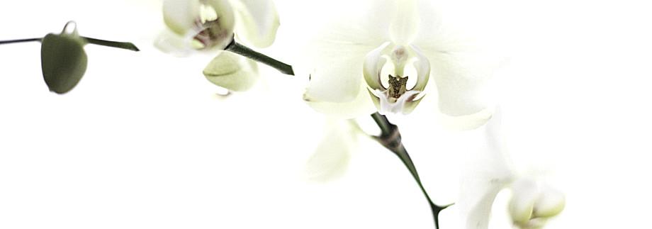 Blumenhaus Sauertz, Blumen, Dekoration